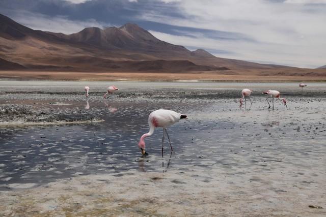bolivia, bolivia, seyahat, fotoğraf