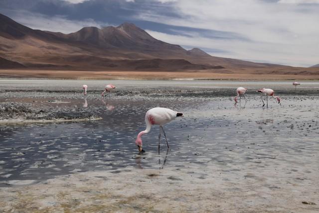 Hedionda Gölü, Bolivya