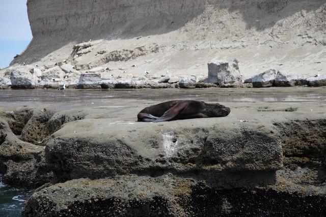Balina turunda rastladığımız yalnız bir denizaslanı