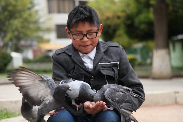 Plaza Avoroa'daki güvercinlerle oynayan genç bir çocuk